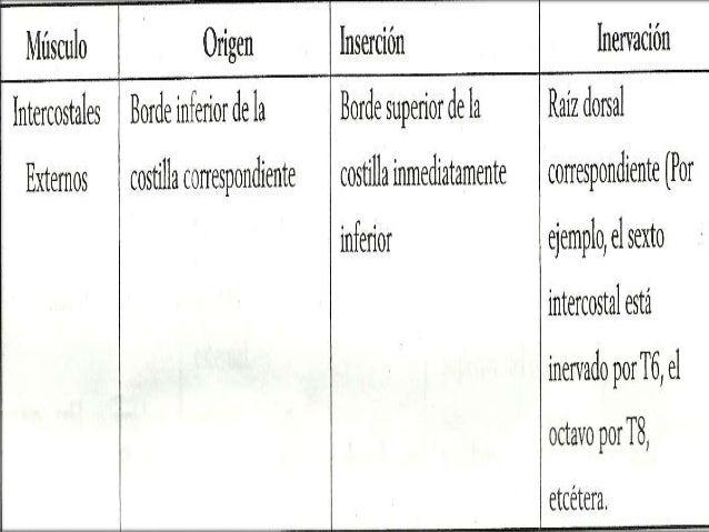 PRINCIPALES MUSCULOS FACILITADORES DE LA FASE INSPIRATORIA