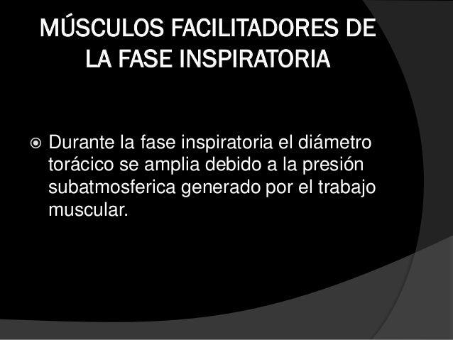 MUSCULOS ACCESORIOS DE LA FASE INSPIRATORIA  Son denominados accesorios de primer orden debido a la aparición temprana de...
