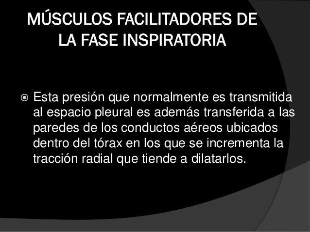 MUSCULOS ACCESORIOS DE LA FASE INSPIRATORIA  Los esternocleidomastoideos. 1 • Es considerado los accesorios mas important...