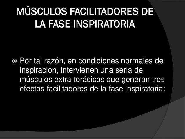MUSCULOS ACCESORIOS DE LA FASE INSPIRATORIA  Escalenos:  Los músculos escalenos son tres: anterior, medio y posterior. ...