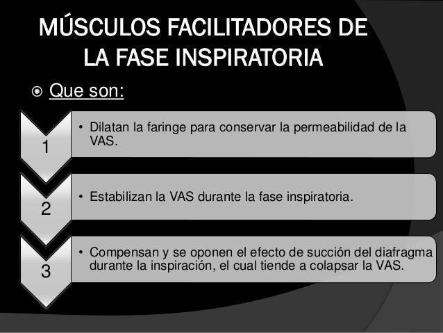 MUSCULOS ACCESORIOS DE LA FASE INSPIRATORIA  Escalenos:  como función adicional:  Fijan las cotillas durante la tos int...
