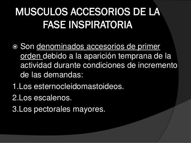 MUSCULOS ACCESORIOS DE LA FASE INSPIRATORIA  Los músculos accesorios de la inspiración de segundo orden, son aquellos que...
