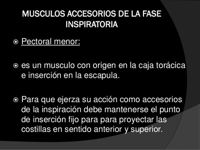 MÚSCULOS ACCEORIOS DE LA FASE ESPIRATORIA  Resto anterior del abdomen:  Es el musculo flexor de la columna vertebral.  ...