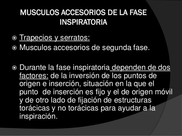 MÚSCULOS ACCEORIOS DE LA FASE ESPIRATORIA  Oblicuos del abdomen: Son las paredes de músculos: 1. Dos externos. 2. Dos int...