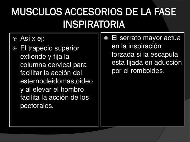 MÚSCULOS ACCEORIOS DE LA FASE ESPIRATORIA  Los oblicuos internos tienen una función similar y usualmente actúan de manera...