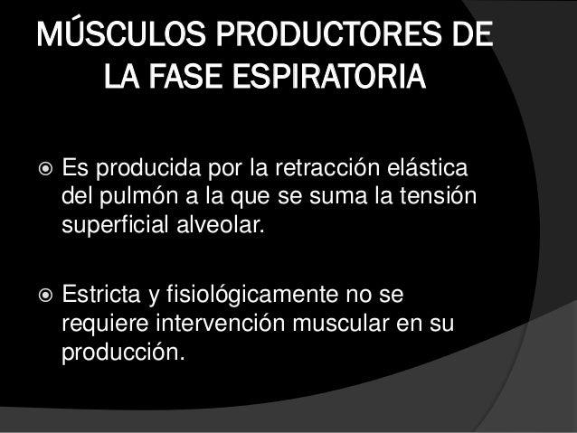 MÚSCULOS ACCEORIOS DE LA FASE ESPIRATORIA  Transverso del abdomen:  Musculo que actúa deprimiendo la pared abdominal y c...
