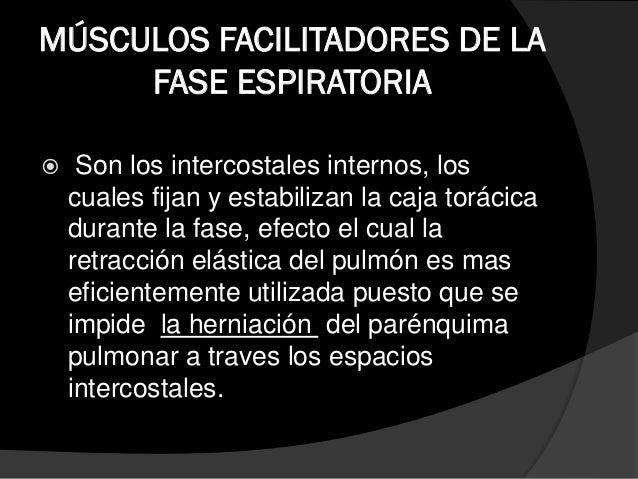 MÚSCULOS ACCEORIOS DE LA FASE ESPIRATORIA  Triangular del esternón:  Musculo ubicado en la pared torácica ventral.  El ...