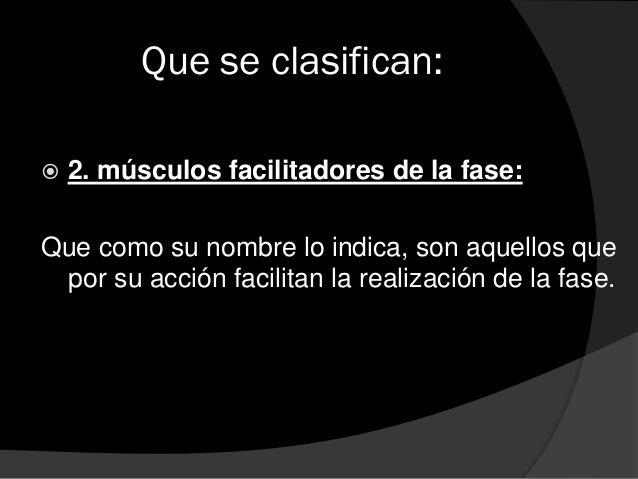 Que se clasifican:  3. músculos accesorios de la fase: que son aquellos que directamente que se utilizan en condiciones n...