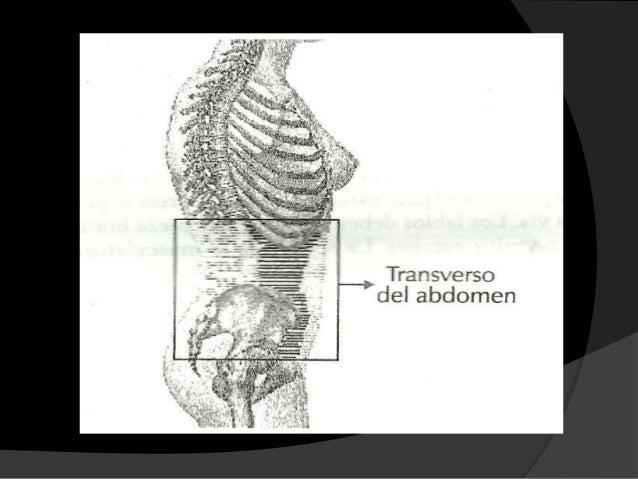 Musculos de la respiracion