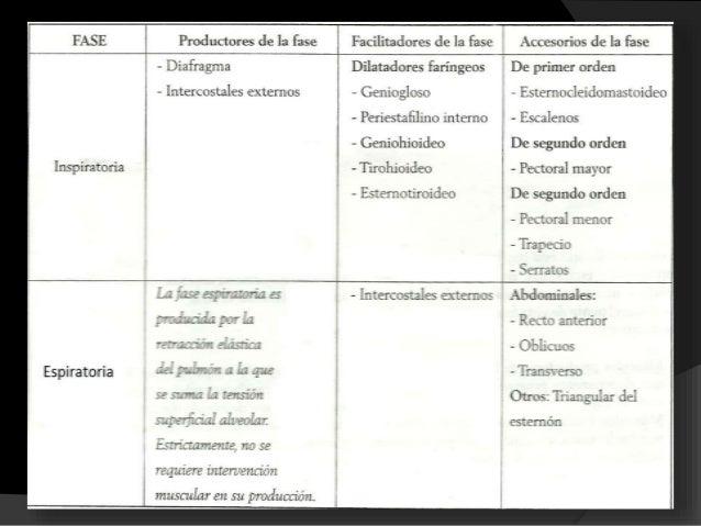 MÚSCULOS PRODUCTORES DE LA FASE INSPIRATORIA  El diafragma: 1 • Es considerado el principal musculo inspiratorio. • Delim...