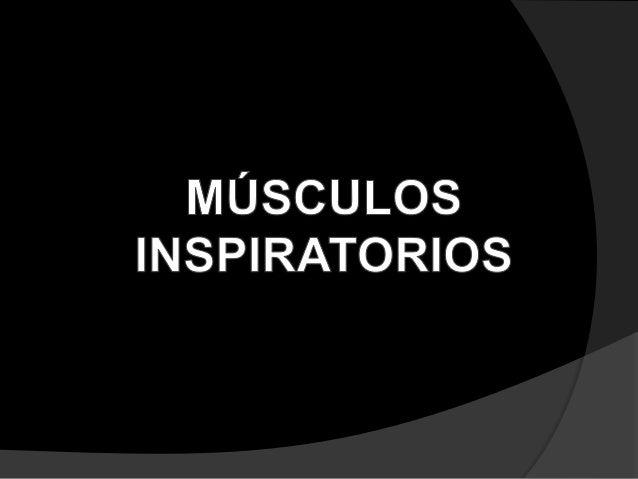 MÚSCULOS PRODUCTORES DE LA FASE INSPIRATORIA  Intercostales externos: 1 • Su principal función es elevarlas costillas ubi...