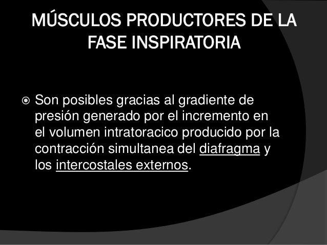 MÚSCULOS FACILITADORES DE LA FASE INSPIRATORIA  Durante la fase inspiratoria el diámetro torácico se amplia debido a la p...