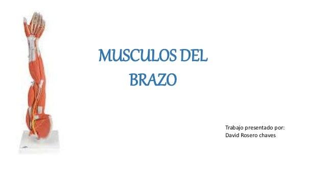MUSCULOS DEL BRAZO Trabajo presentado por: David Rosero chaves