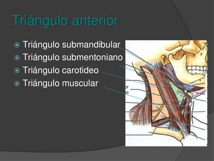 Triángulo anterior<br />Limitado por el borde anterior del esternocleidomastoideo, línea media cervical y mandíbula.<br />