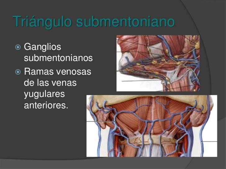 Triángulo submentoniano<br />Bordes mediales del vientre anterior del digástrico y hueso hioides<br />