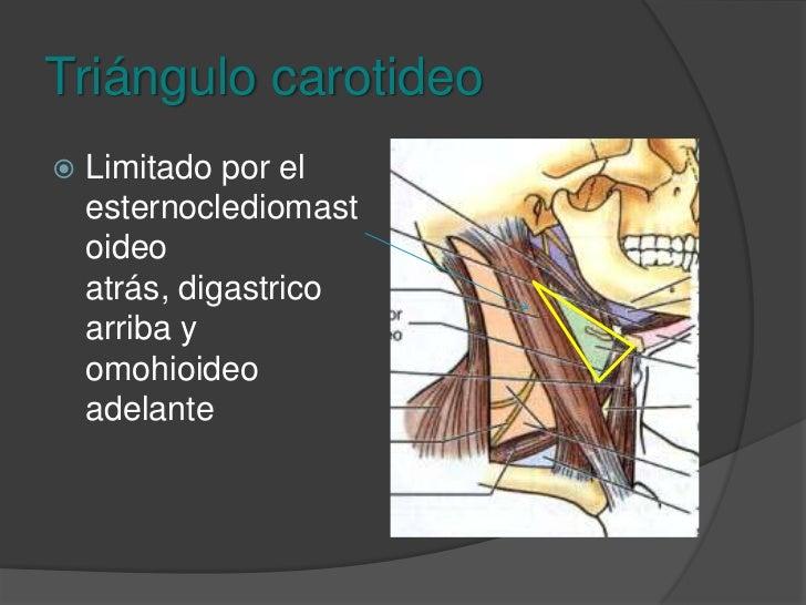 Triángulo submentoniano<br />Ganglios submentonianos<br />Ramas venosas de las venas yugulares anteriores.<br />