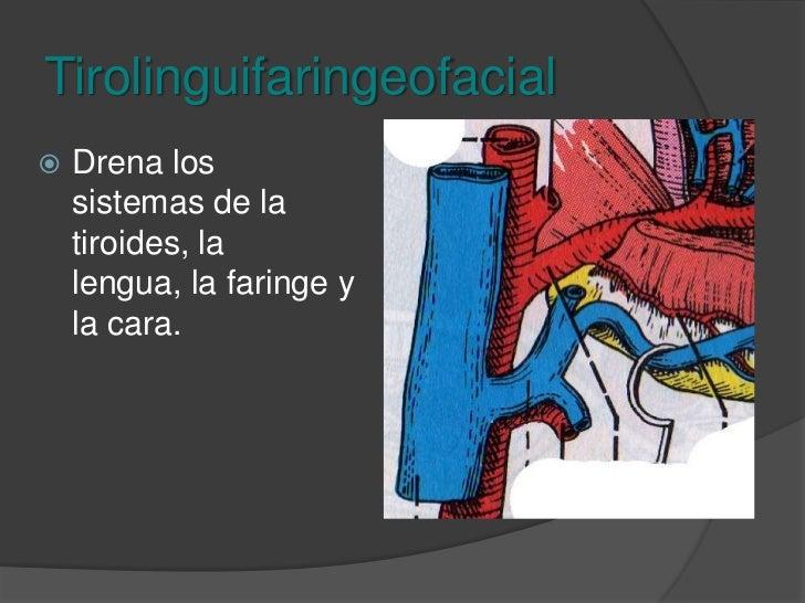 Tronco venoso tirolinguifaringeofacial<br />