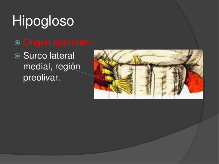 Origen real:<br />Medula oblonga y comprende 2 núcleos<br />Núcleo lingual<br />Núcleo accesorio<br />Hipogloso<br />