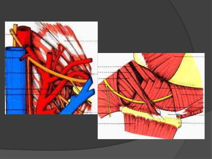 Trayectoria:<br />Sale del cráneo por el conducto condíleo anterior entrando al espacio retroestileo<br />Pasa por debajo ...