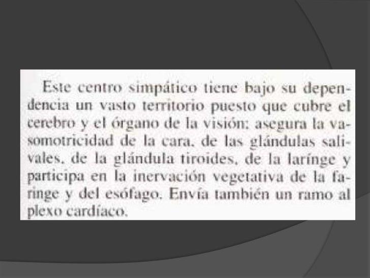 Ramas del ganglio superior<br />Rama carotidea. Que se anastomosa con el trigemino.<br />Rama laringea.<br />Rama faringea...