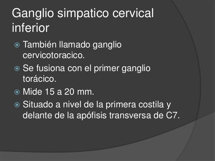 Ramas del ganglio medio<br />Ramas carotida externa y 4 primeras cervicales.<br />Ramas al plexo nervioso cardiopulmonar.<...