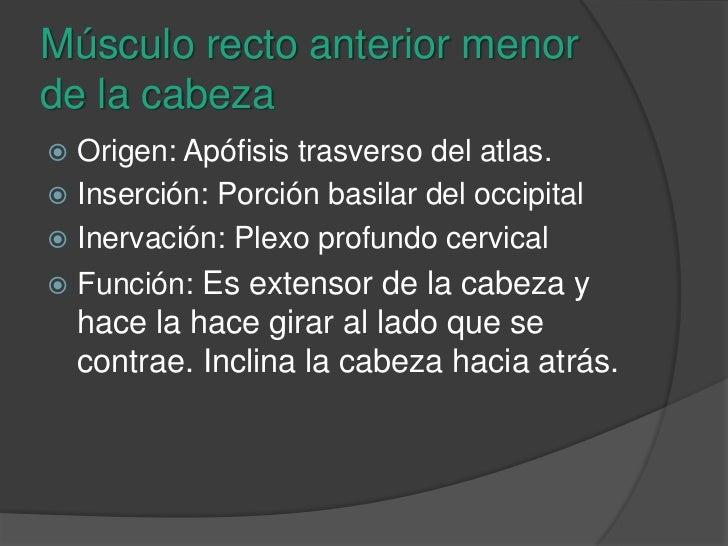 Músculo recto anterior menor de la cabeza<br />Origen: Apófisis trasverso del atlas.<br />Inserción: Porción basilar del o...