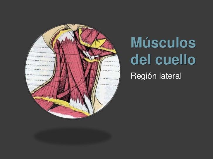 Musculos Del Cuello Slide 3