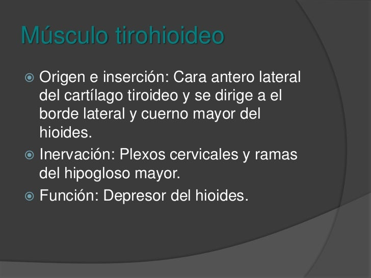Músculo tirohioideo<br />Origen e inserción: Cara antero lateral del cartílago tiroideo y se dirige a el borde lateral y c...