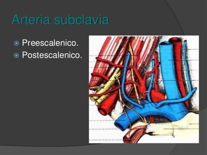 Arteria subclavia<br />Origen: <br />Derecha: Tronco braquiocefálico<br />Izquierda: Cayado de la aorta.<br />Trayecto: Ar...