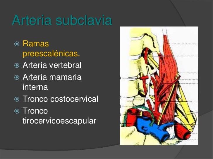 Arteria subclavia<br />Preescalenico.<br />Postescalenico.<br />