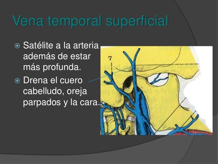 Vena yugular externa<br />Formada por tres afluentes: <br />Temporal superficial <br />Plexo pterigoideo (maxilar) <br />A...