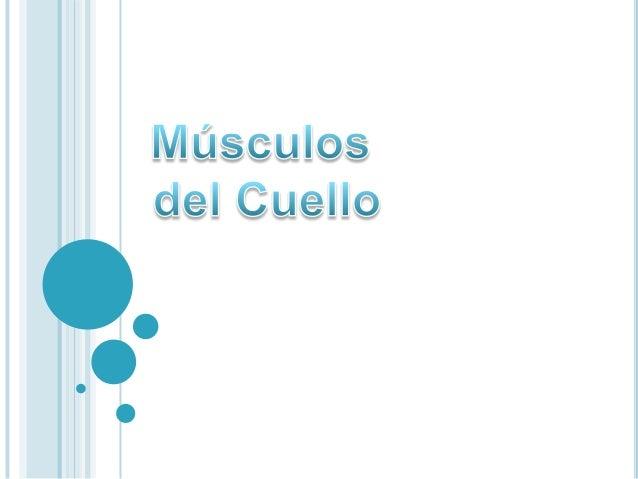 TrianguloOccipitalVYETrianguloomoclavicularSubmandibularSubmentonianoCarotideoMuscular(Omotraqueal)Contiene*EsternoCleidoM...