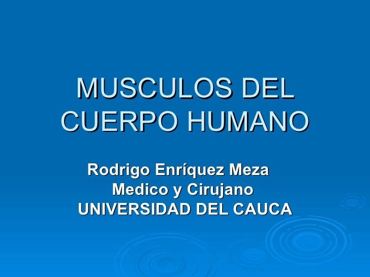 MUSCULOS DEL CUERPO HUMANO Rodrigo Enríquez Meza  Medico y Cirujano  UNIVERSIDAD DEL CAUCA