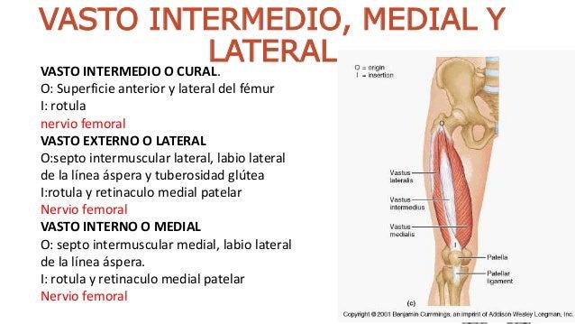 Musculos del gluteo y muslo