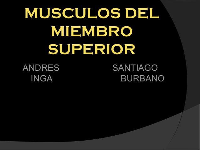 MUSCULOS DEL  MIEMBRO  SUPERIORANDRES   SANTIAGO INGA     BURBANO