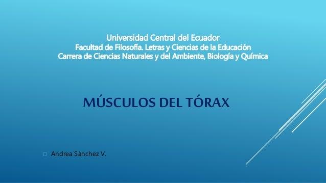 MÚSCULOS DEL TÓRAX  Andrea Sánchez V. Universidad Central del Ecuador Facultad de Filosofía. Letras y Ciencias de la Educ...