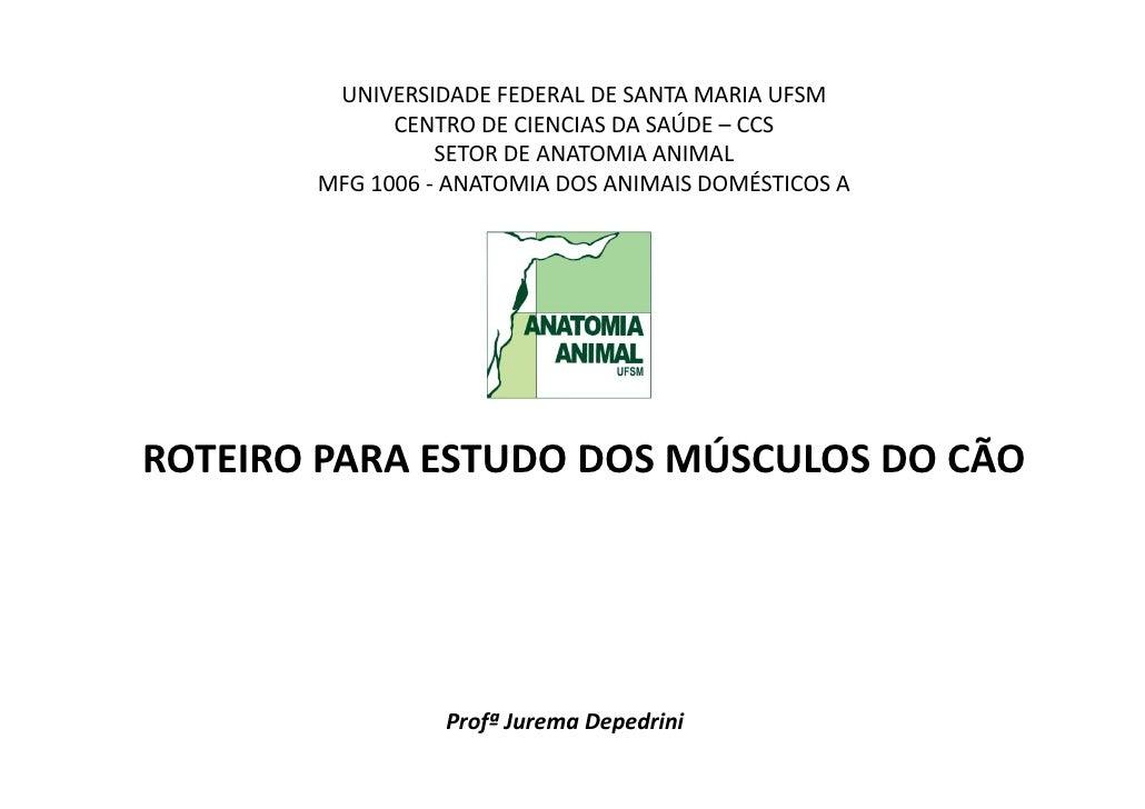 UNIVERSIDADE FEDERAL DE SANTA MARIA UFSM             CENTRO DE CIENCIAS DA SAÚDE – CCS                 SETOR DE ANATOMIA A...