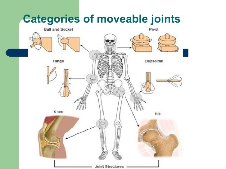 musculoskeletal system 11 infection and the musculoskeletal system sydney nade chapter objectives after studying this chapter you should be able to: 1 understand how microorganisms reach bones or joints.