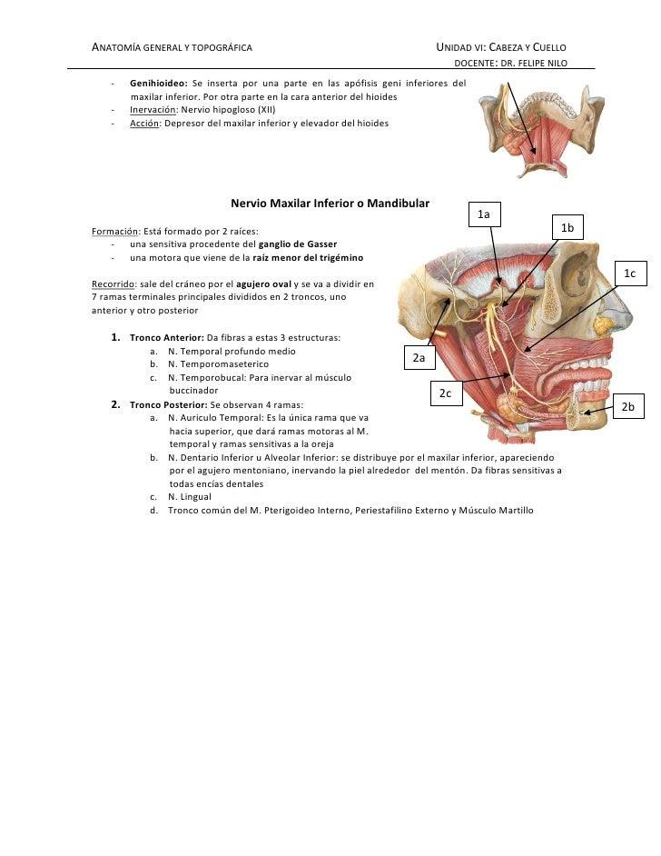 Musculos masticadores Slide 3