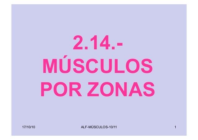 ALF-MÚSCULOS-10/11 1 2.14.- MÚSCULOS POR ZONAS 17/10/10