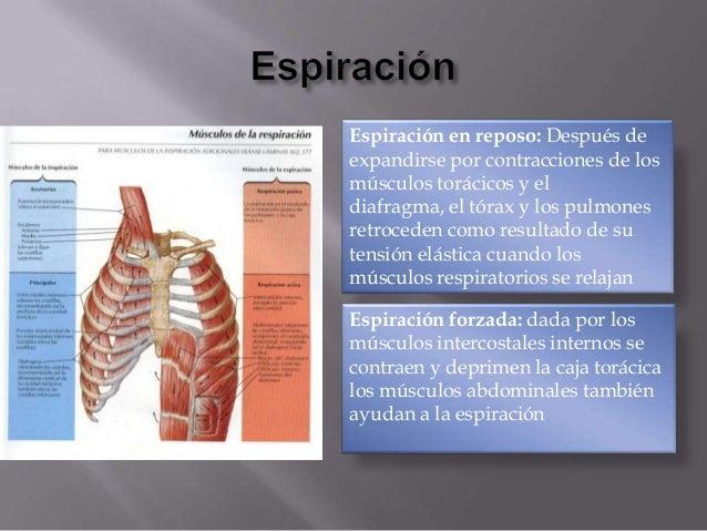 Musculos que intervienen en la respiracion normal y