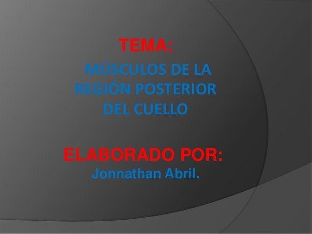 TEMA: MÚSCULOS DE LAREGIÓN POSTERIOR   DEL CUELLOELABORADO POR:  Jonnathan Abril.