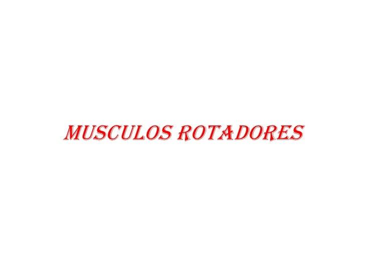 MUSCULOS ROTADORES