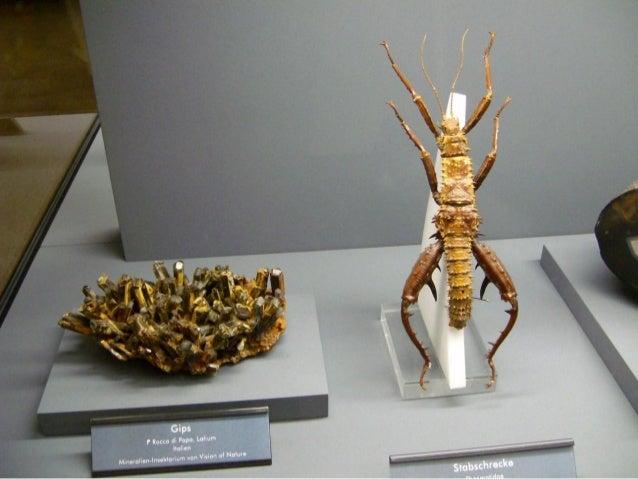Museu de pedras e insetos Slide 2