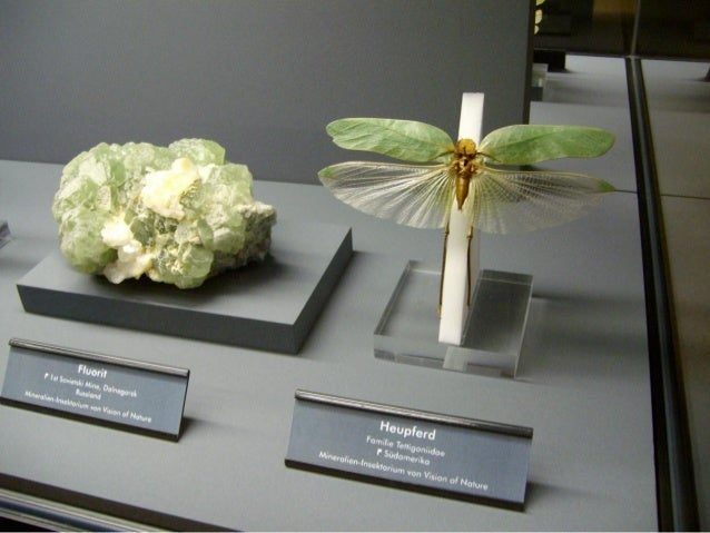 Museu de pedras e insetos Slide 3