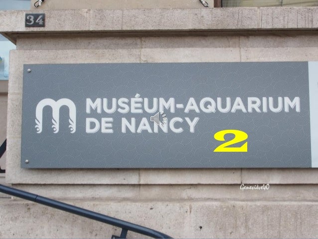 museum aquarium de nancy 2
