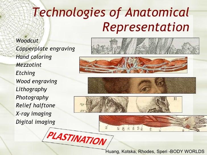 Technologies of Anatomical Representation <ul><li>Woodcut </li></ul><ul><li>Copperplate engraving </li></ul><ul><li>Hand c...