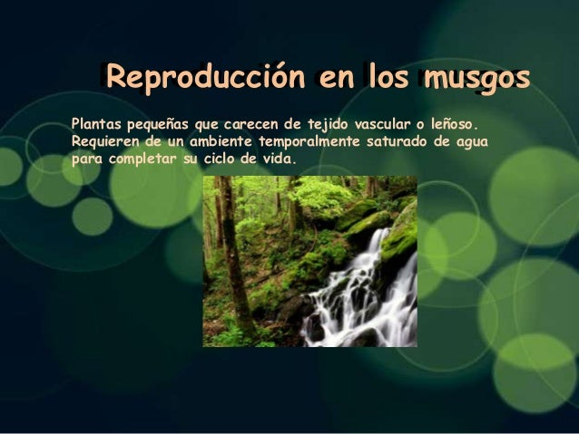 Reproducción en los musgos Reproducción en los musgos Plantas pequeñas que carecen de tejido vascular o leñoso. Requieren ...