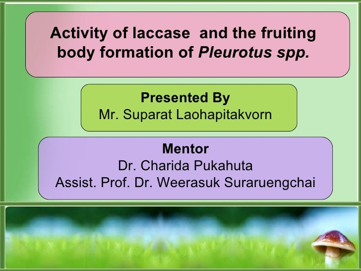 Activity of laccase  and the fruiting body formation of  Pleurotus spp . Presented By Mr. Suparat Laohapitakvorn Mentor Dr...
