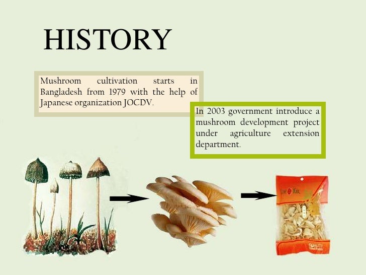Mushroom Farming As Commercial Business | Cultivation | Procedure